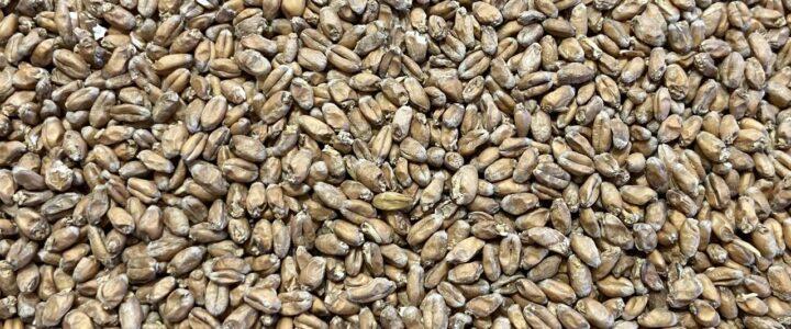 Brautag #104: Hopfiges Weizen